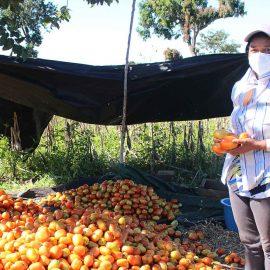 Trabajando por la seguridad alimentaria en el oriente de El Salvador